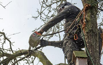 the process of removing dead wood from Amersham Old Town trees