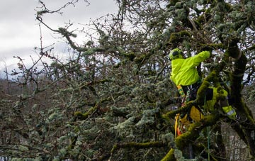 experienced Amersham Old Town arborists are needed