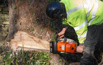 tree removal Amersham Old Town, Buckinghamshire