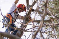 trusted Buckinghamshire tree dead-wooding services